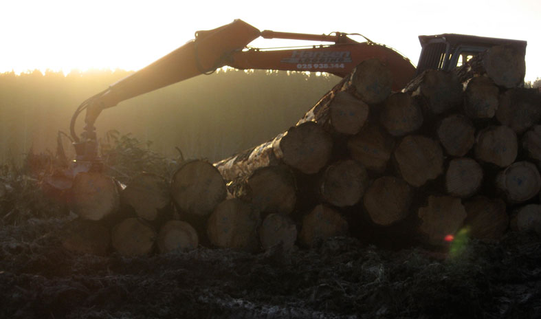 All quiet at sunset at a logging forest.